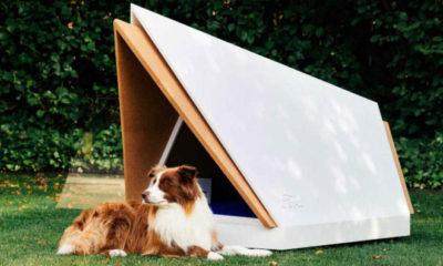 конура-для-собак-фото