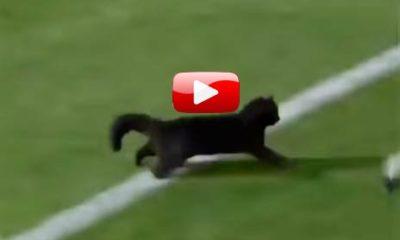 видео-приколы-с-котом-футболистом