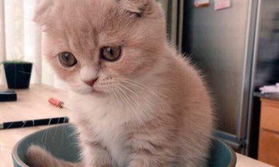 грустный кот в блюдце фото приколы