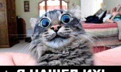 кот наркоман демотиваторы с надписями