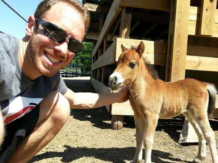 очень маленькая карликовая лошадь