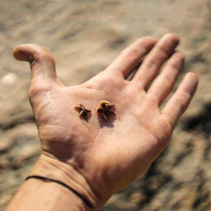 очень маленькая морская звезда
