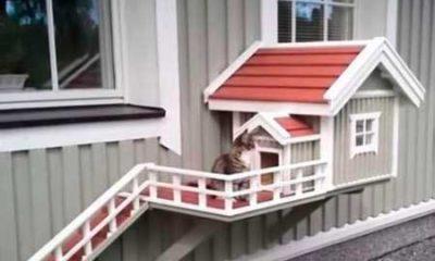 уличный домик для кошки или кота